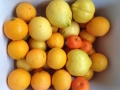 Bounty of citrus